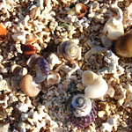 "Shells and Foramineral Sand <a style=""margin-left:10px; font-size:0.8em;"" href=""http://www.flickr.com/photos/89335711@N00/8595554779/"" target=""_blank"">@flickr</a>"
