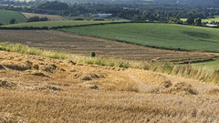 summertime in rural Dorset (lunaryuna) Tags: uk england dorset landscape ruraldorset fields harvest crops straw colours landscapeabstract summer season seasonalwonders lunaryuna