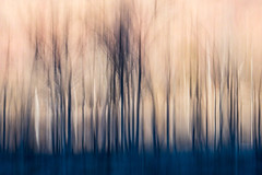 WEEDS (Deborah Hughes Photography) Tags: weeds icm intentionalcameramovement blur art