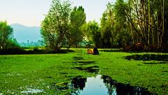 The Green Carpet (shubhankrishi) Tags: dal kashmir green dallake india incredibleindia reflection boat lonely nature scenic morning refreshing weather
