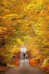 One Autumn Day (Chee Seong) Tags: beecraigs country park forest tree autumn fall colours dog walkers relaxing lane road scotland west lothian