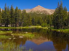 Yosemite Subalpine Mirror (RobertCross1 (off and on)) Tags: 1250mmf3563mzuiko ca california em5 highsierra omd olympus sierranevada sierras tuolumne yosemite yosemitenationalpark bluesky forest lake landscape mountain nature pond reflection subalpine trees unitedstates us