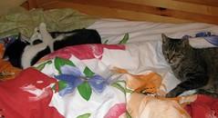 Zwei Schlfer (ute_hartmann) Tags: jonas katze kater bett claudia cat