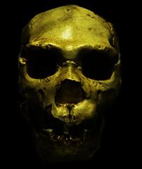 Calavera (Alvaro.Moreno) Tags: calavera craneo skull