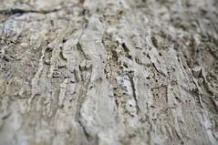 Wood texture (Z!SL) Tags: wood sonnarte1824 sonnar2418za sonnar sonyphotographing sony zeiss carlzeiss nature sonyflickraward bokeh dof depthoffield nex5r emount minoltaemount mirrorless sel24f18z sel24f18za