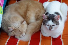 Together (frankbehrens) Tags: katze katzen cat cats chat chats gato gatos kater tom