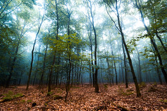 Morning mist (Passe-) Tags: early morning wood woods tree trees summer late autumn mist fog foggy nature quite landscape landscapes beautiful colors color skrylle sweden sverige skne dalby skog vacker dimma tidig morgon