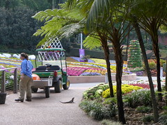 First day of spring - 01 Sept 2016. (tanetahi) Tags: romastreetparkland publicpark municipalpark brisbane downtown landscaping subtropical bedding flowers