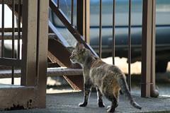 (koutakuokumura) Tags:  cat canon eoskissx7