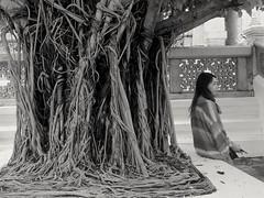 Repos Rest (alainpere407) Tags: alainpere bangkok thailande figuier ficus blackandwhite