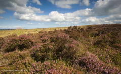 Exmoor National Park (Daryl 1988) Tags: exmoor nationalpark sky clouds sloud colour countryside heather moor vista landscape somerset photography land nikon d2xs tamron beautiful