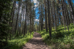 Trail - Hermitage Point - Colter Bay - Grand Teton National Park - Wyoming - 21 June 2016 (goatlockerguns) Tags: mountain view hermitage point colter bay grand teton national park wyoming usa unitedstatesofamerica west western nature natural nationalpark lake pond forest trees tree trail
