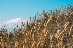 Island of Rgen (PHOTOPHOB) Tags: rgen rugia ruegen landscape landschaft photophob ostsee balticsea panasonic dmc g6 lumix rural