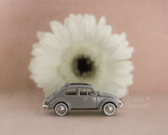 Bug and Daisy (Anna Dykema) Tags: volkswagen vw bug gerber daisy flower stilllife pink blush gray nursery nurserydecor
