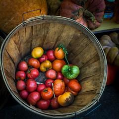 (262/366) Tomato Bushel (CarusoPhoto) Tags: square format tomato tomatoes green heirloom bushel light beautiful iphone 6 plus john caruso carusophoto photo day project 365 366 food