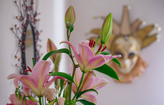 Lily (shpongleri) Tags: lily flower mask venice mirror colors pentax k50