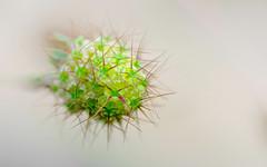mtor (christophe.laigle) Tags: xf60mm fuji colors fleur macro xpro2 couleurs flower