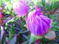 Burst of colour (jo.elphick) Tags: burrill lake nsw australia