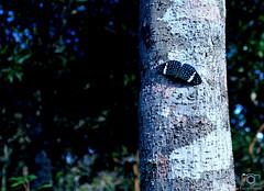 Borboletou-se (Lucian Crispim) Tags: borboleta animal inseto