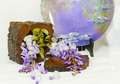 remembering Monet (Bev-lyn) Tags: wisteria stilllife monet flowers purple