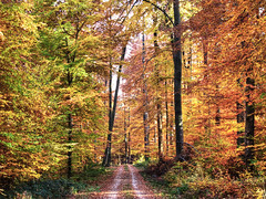 Autumn Forest (Habub3) Tags: street wood travel autumn holiday color nature leaves forest canon germany deutschland search reisen flora europa europe stuttgart urlaub herbst natur powershot holz wald vacanze weg g12 rotenberg serach strase 2013 habub3 mygearandme