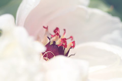 details (Sweety586) Tags: flowers white flower detail macro canon 50mm spring bokeh pastel details 14 blume frhling blten weis nicety 1100d