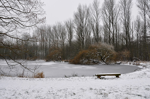 Bench at Frozen Pond