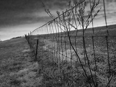 morning fence (greg g49) Tags: bw fence am olympus summilux paturnpike lookingeast em5 panasonicleica25mmf14