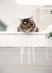 3683 (E.L.A) Tags: roof pets snow ice animal vertical closeup turkey outdoors photography day tabby nopeople istanbul domesticanimals peeking domesticcat 1213 oneanimal colorimage 051213 animalthemes coldtemperature 453450063