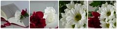 Red and white (Miroiz) Tags: red white redandwhite flres