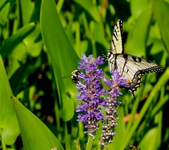 Sharing (btn1131) Tags: flower nature floral butterfly fuji insects bee x10 mygearandme