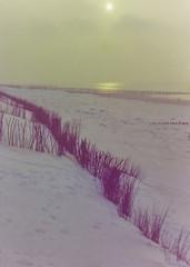 dutch winter (96) (bertknot) Tags: winter dutchwinter dewinter winterinholland winterinthenetherlands hollandsewinter winterinnederlanddutchwinter