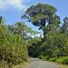 Percorso asfaltato che collega Bocas del Toro a Bocas del Drago