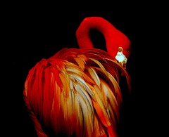 O flamingo (Ricardo Venerando) Tags: life park bird art nature animal brasil wildlife natureza olympus aves explore discovery soe photomix naturesfinest ornitologia conservacion nationalgeografic flickr10 diamondclassphotographer ysplix goldstaraward ricardovenerando sonyawards2013