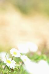 Spring - Explored! (Tinina67) Tags: sun france flower season spring warm mood wiese daisy tina odc gers ourdailychallenge tinina67