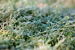 another cold morning (Igor Klajo) Tags: frost sun sunshine cold winter grass nature lug osiječkobaranjska croatia canoneos400d canonef70200mmf4lusm canon niftyfifty povjerenstvo