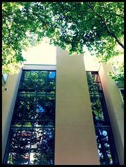 Platanen-Allee I (Casey Hugelfink) Tags: trees summer munich münchen alley neuperlach planttrees platanen