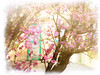 The Arrival of Spring series (Nick Kenrick..) Tags: pink spring blossom cherryblossom sakura cherrytree hami sakurahanami tatot