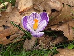 In de tuin. (vdbann) Tags: belgi tuin thuis bel vlaanderen oostvlaanderen bassevelde
