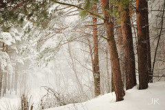 White Silence (Jenny Rainbow) Tags: christmas wood winter light snow tree art nature beauty grass pine sepia illustration fairytale forest children snowflakes bush scenery natural time russia walk branches scene story willow pines firstsnow russian pinetrees christmastime fineartphotography grisaille snowfalling blizzar jennyrainbowartphotography