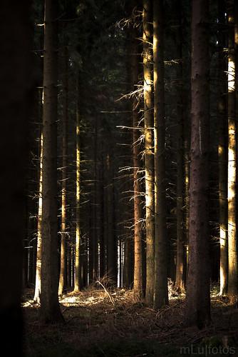 Woodland Experiments