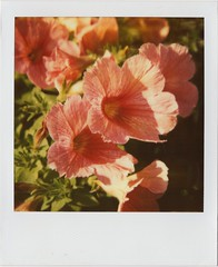 Summer makes you happy (Joep Polaroid Photography) Tags: original color film polaroid sx70 600 instant ndfilter intergral joeppolaroidphotography