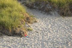 DSC_0151 (RYANinHD_87) Tags: maine hermit island campground beach dunes sanddunes sand sandunes seagrass dunegrass