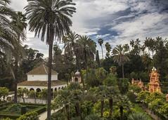 Alcazar Gardens (Hans van der Boom) Tags: europe spain vacation holiday seville sevilla alcazar palace gardens garden palm trees hedges green sp