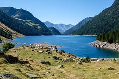 """Beaucoup de """"randonneurs"""" du dimanche passent une journe en famille autour de ce lac (alainlecroquant) Tags: montagne lac pyrnes nouvielle oule bastan infrieur suprieur milieu barrage artigusse parking vache cheveaux refuge refugedebastan"""