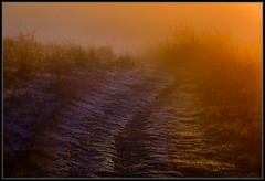Cold Morning / Warm Light (Ernie Misner) Tags: morning morninglight light fortsteilacoompark lakewoodwashington lakewood washington erniemisner nikon nik lightroom capturenx2 cnx2 f8andbethere