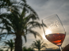 cheers! (d@neumi) Tags: sun palm palme sky himmel vino wine wein glas tiefenschrfe dof flickr glass sunset panasonic lumix g7 bokeh