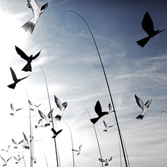 Birds (a.penny) Tags: kites drachen vgel birds square quadrat bleachebypass apenny nikon aw120 1x1 500x500