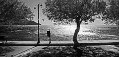 Plakias 1d (Bilderschreiber) Tags: plakias promenate coast kste kreta crete hellas griechenland greece sun sonne reflexion spiegelung gegenlicht backlight black white schwarzweis bw sw