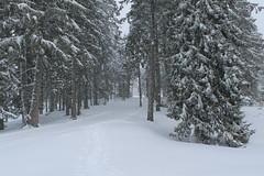 Chemin de randonnée vers la cabane du Carroz Photo